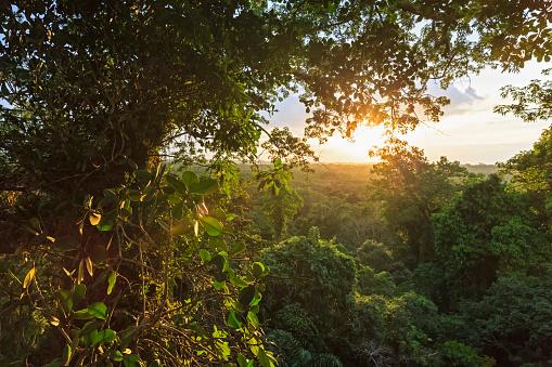 Amazon River「Ecuador, Amazon River region, treetops in rain forest」:スマホ壁紙(13)