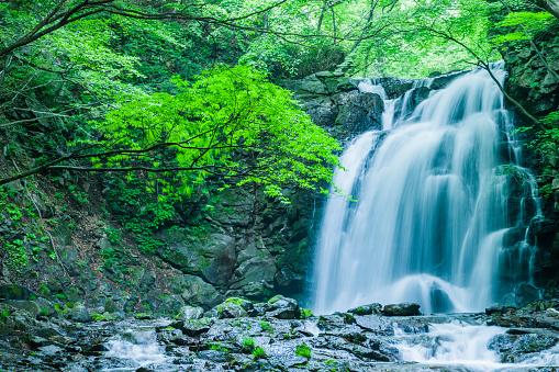 Waterfall「Waterfalls in the Forest」:スマホ壁紙(3)