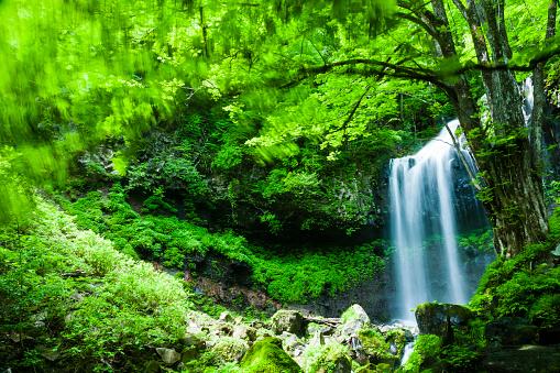 Nikko City「Waterfalls In The Forest」:スマホ壁紙(6)