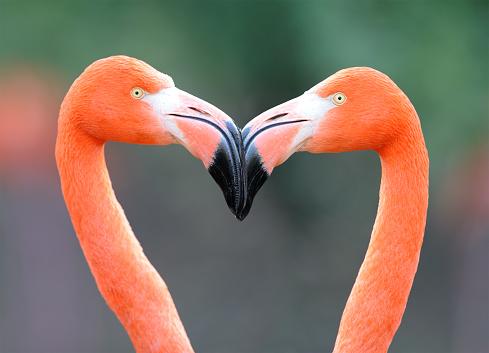 Love - Emotion「Flamingo Heart」:スマホ壁紙(9)