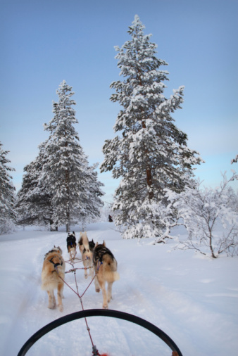 Dogsledding「Husky ride」:スマホ壁紙(9)