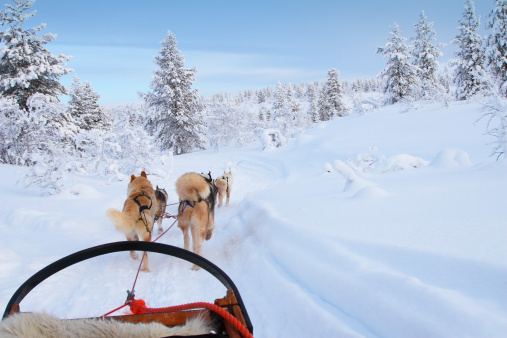 Dogsledding「Husky ride」:スマホ壁紙(2)