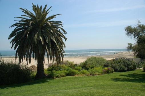 Angeles National Forest「Palm Tree near the Beach」:スマホ壁紙(18)