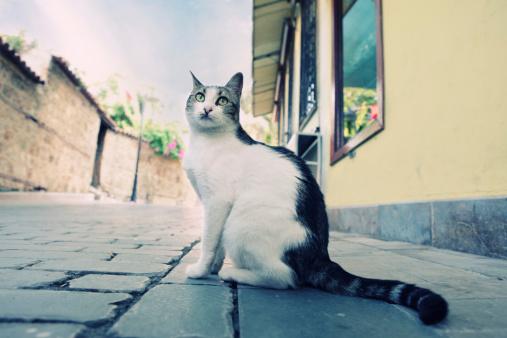 Mixed-Breed Cat「Cat in Old Town of Antalya, Turkey」:スマホ壁紙(8)
