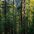 コルビル国有林壁紙の画像(壁紙.com)