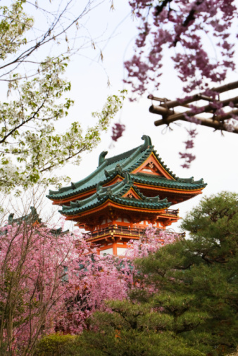 Cherry Blossoms「Temple with cherry blossom」:スマホ壁紙(7)
