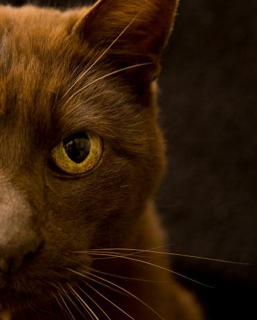 Pouncing「Brown Cat」:スマホ壁紙(14)