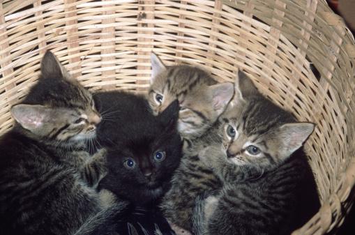子猫「kittens」:スマホ壁紙(1)