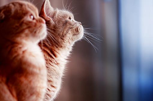 Mixed-Breed Cat「kittens」:スマホ壁紙(4)