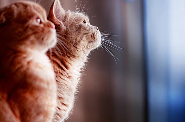 kittens:スマホ壁紙(壁紙.com)