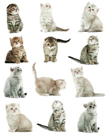 Kitten「Kittens」:スマホ壁紙(10)