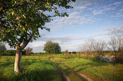 Country Road「Landscape」:スマホ壁紙(3)