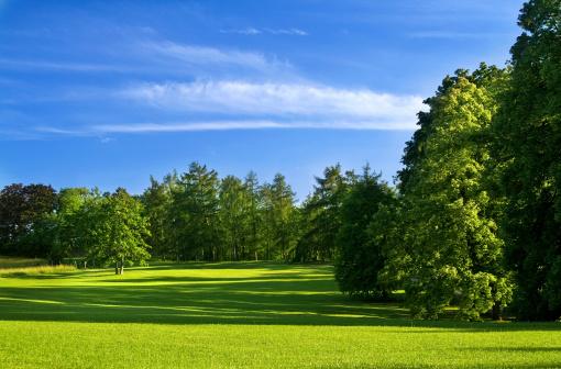 樹木「の風景」:スマホ壁紙(16)