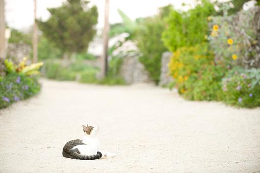 一匹「Cat lying down on footpath」:スマホ壁紙(11)