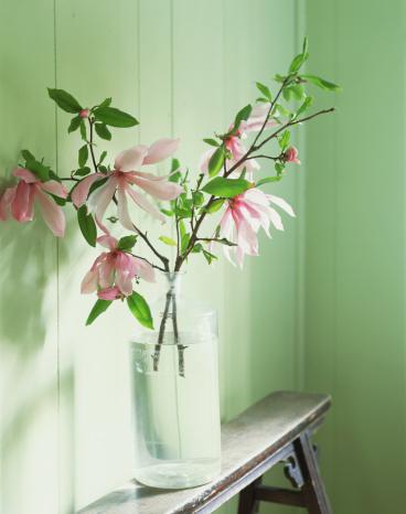 Magnolia「Magnolias in glass vase」:スマホ壁紙(17)