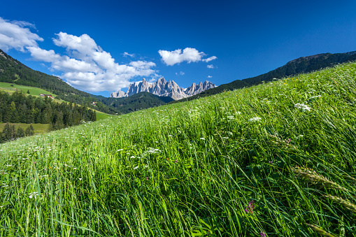 Dolomites「Green meadows of Alps」:スマホ壁紙(10)