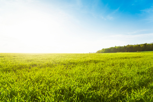 雲「グリーンの草地」:スマホ壁紙(6)