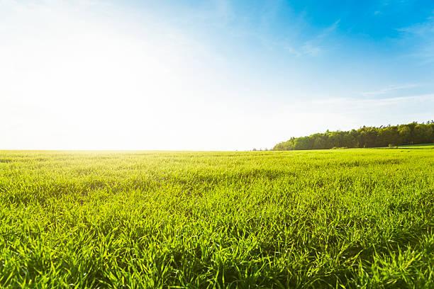 Green meadow:スマホ壁紙(壁紙.com)