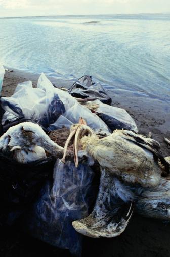 ガラス「Dead Seabirds on a Beach」:スマホ壁紙(6)