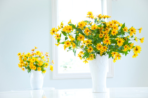 ひまわり「Cucumber leaf Sunflowers (Helianthus cucumerifolius) in vases」:スマホ壁紙(2)