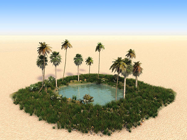 Oasis with palm trees in the middle of desert:スマホ壁紙(壁紙.com)