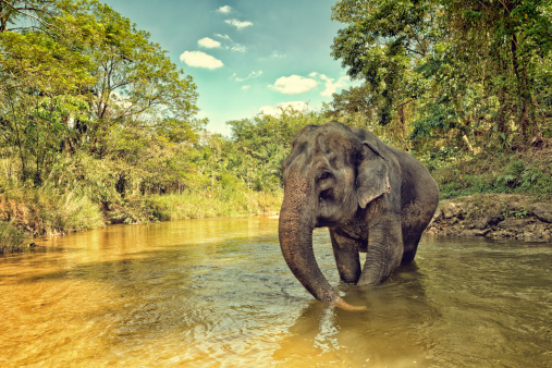Rainforest「Asian Elephant」:スマホ壁紙(7)