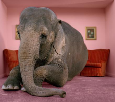 Three Quarter Length「Asian elephant in lying on rug in living room」:スマホ壁紙(6)