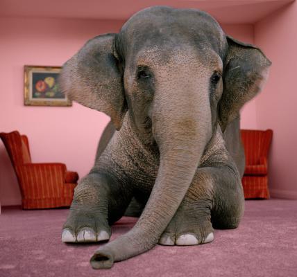 Elephant「Asian elephant in lying on rug in living room」:スマホ壁紙(11)