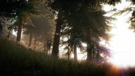 常緑樹「フォレスト (16:9) の朝」:スマホ壁紙(15)