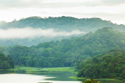 アマゾン熱帯雨林「朝には、レインフォレストシャワー」:スマホ壁紙(14)