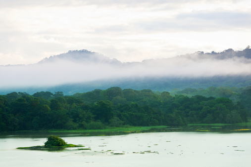 アマゾン熱帯雨林「朝には、レインフォレストシャワー」:スマホ壁紙(12)