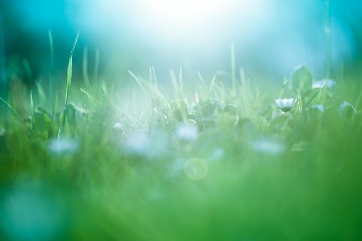 Green Color「Morning in the field」:スマホ壁紙(6)