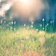 春壁紙の画像(壁紙.com)