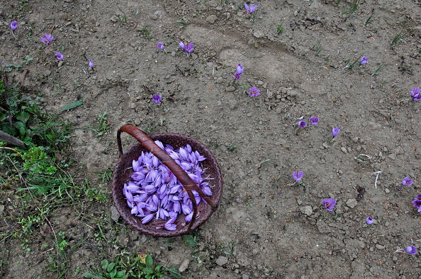 Spice「Basket Of Saffron」:写真・画像(9)[壁紙.com]