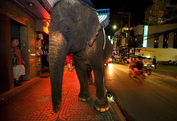 バンコク「Urban Elephants Roam The Streets of Bangkok」:写真・画像(15)[壁紙.com]