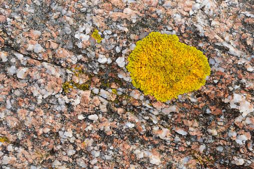 Abstract「Lichen on Granite rock pattern.」:スマホ壁紙(14)