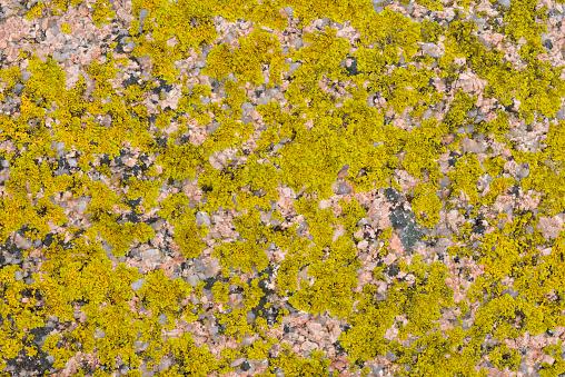 Abstract「Lichen on Granite rock pattern.」:スマホ壁紙(13)