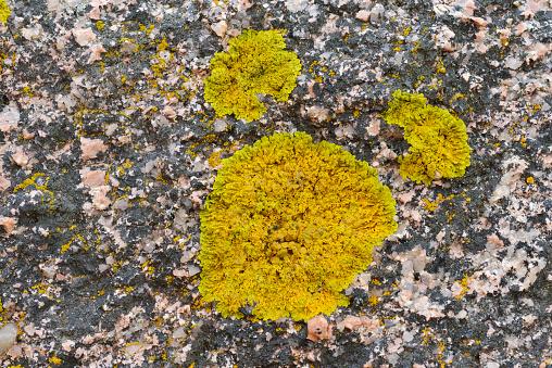 Abstract「Lichen on Granite rock pattern.」:スマホ壁紙(12)