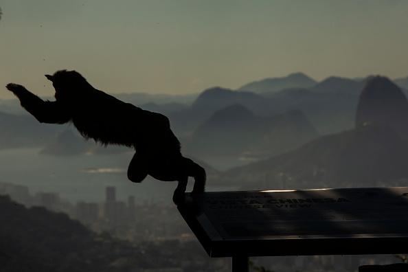 Environment「Several Monkeys are Seen at Alto da Boa Vista Amidst the  Coronavirus (COVID - 19) Pandemic」:写真・画像(14)[壁紙.com]