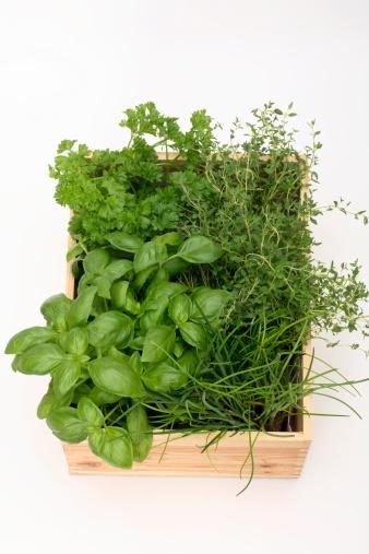 Thyme「Herb plants in wood pot, close-up」:スマホ壁紙(11)