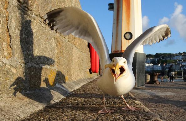 ヒューマンインタレスト「Seagull Attacks Being Reported From Coastal Towns This Summer」:写真・画像(17)[壁紙.com]