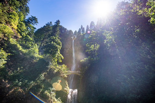Columbia River Gorge「View of Multnomah Falls surrounded by forest in Oregon」:スマホ壁紙(19)