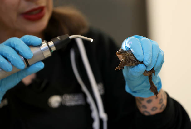 Essential Workers At Oakland Zoo Care For Animals During Coronavirus Shutdown:ニュース(壁紙.com)