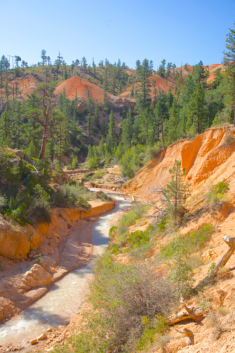 Tree「Hoodoos, Mossy Cave Trail and Sevier River in Bryce Canyon National Park, Utah」:スマホ壁紙(16)