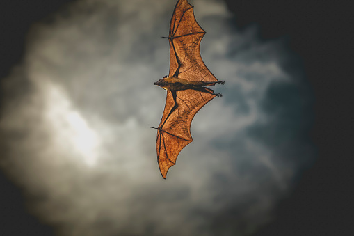 Superhero「fruit bat flying」:スマホ壁紙(14)