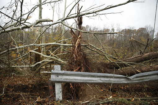 Crash Barrier「Trees damaged by a tornado in Indiana」:スマホ壁紙(3)