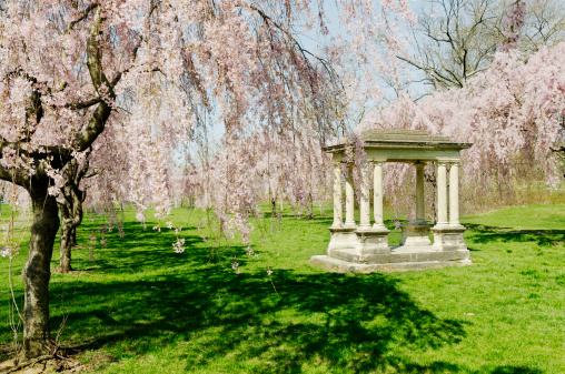 Cherry Blossom「ガゼボでブルーミングサクラアレイ-フィラデルフィア」:スマホ壁紙(14)