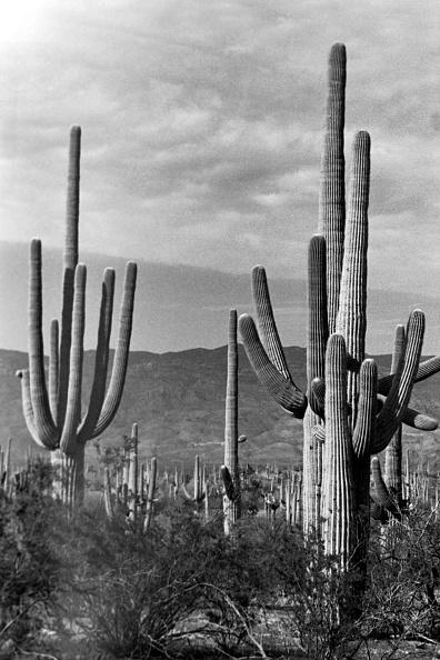 Horizon「Arizona」:写真・画像(14)[壁紙.com]
