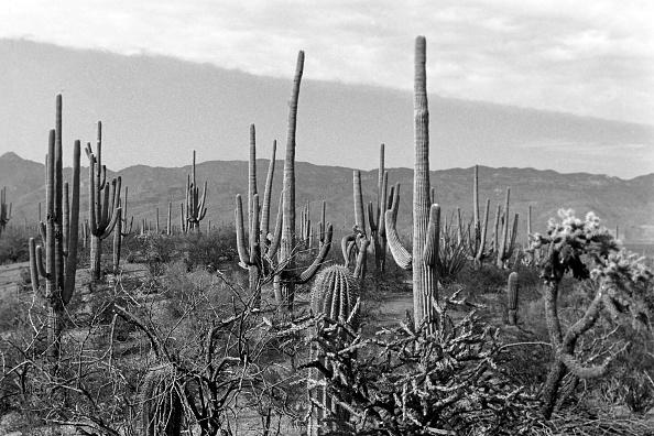 Horizon「Arizona」:写真・画像(18)[壁紙.com]