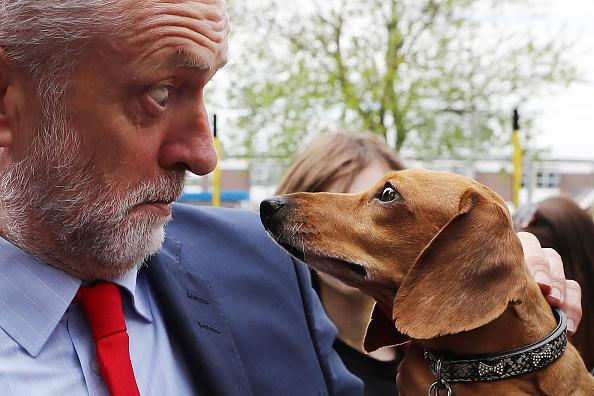 動物「Jeremy Corbyn on the Campaign Trail at James Paget Hospital in Great Yarmouth」:写真・画像(1)[壁紙.com]